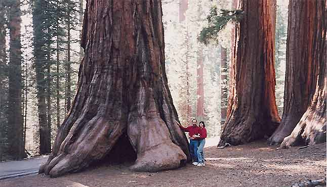 Really HUGE Trees
